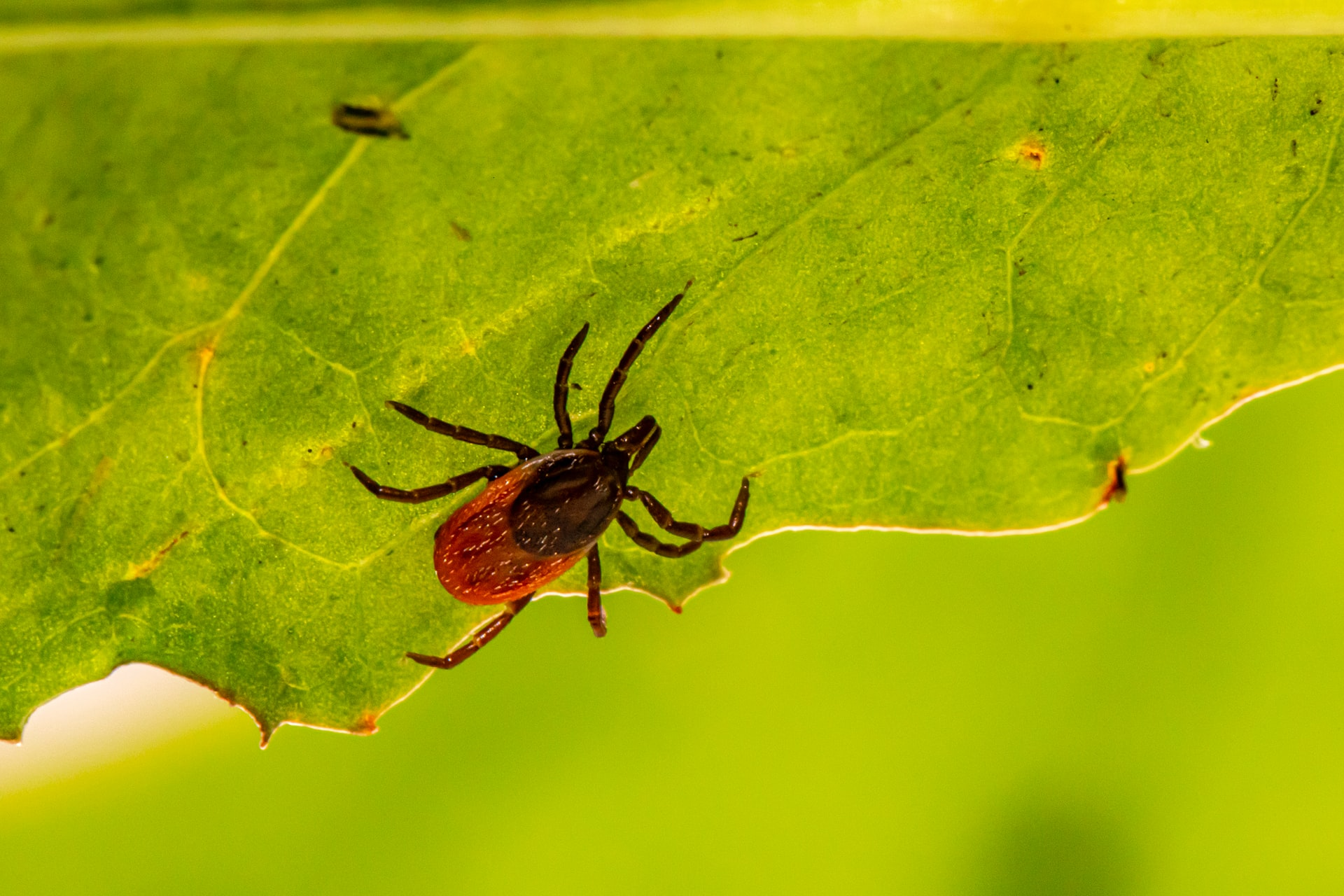 Lyme Disease Information and Resources