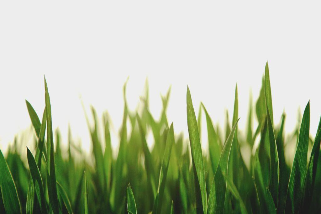 grass and pesticide exposure
