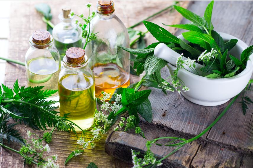 The Basics of Herbal Medicine